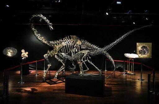 Les squelettes du diplodocus (arrière-plan) et de l'allosaurus exposés chez Drouot le 6 avril 2018, avant leur mise aux enchères.