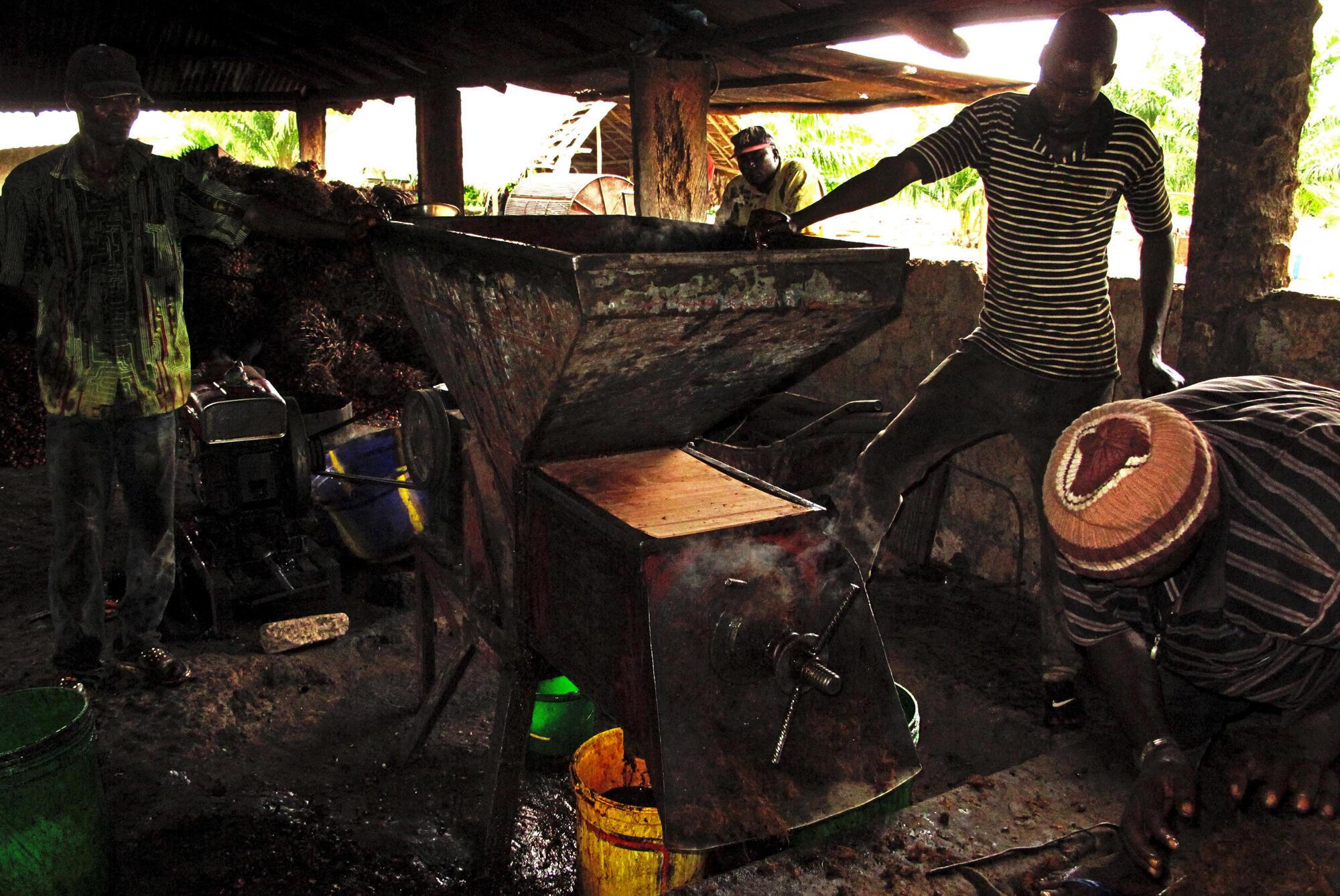 L'unité de production d'huile de palme non raffinée de la start up Eleis.