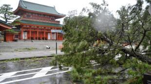 Jebi a déraciné plusieurs arbres à Kyoto.
