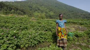 Une Rwandaise dans un champ de pommes de terre, au Mont Bisoke, près de Musanze.