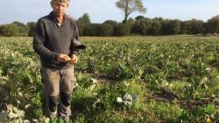 Après quarante années d'agriculture, Bernard Mazet commence à produire ses propres semences dans le Finistère, en Bretagne.