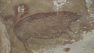 This cave painting at Leang Tedongnge in Sulawesi, Indonesia is the world's oldest known cave painting: a life-sized picture of a wild pig that was made at least 45,500 years ago
