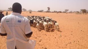 Moussa Amidou, technicien d'élevage, tient un pistolet pour inoculer le vaccin contre la peste des petits ruminants.