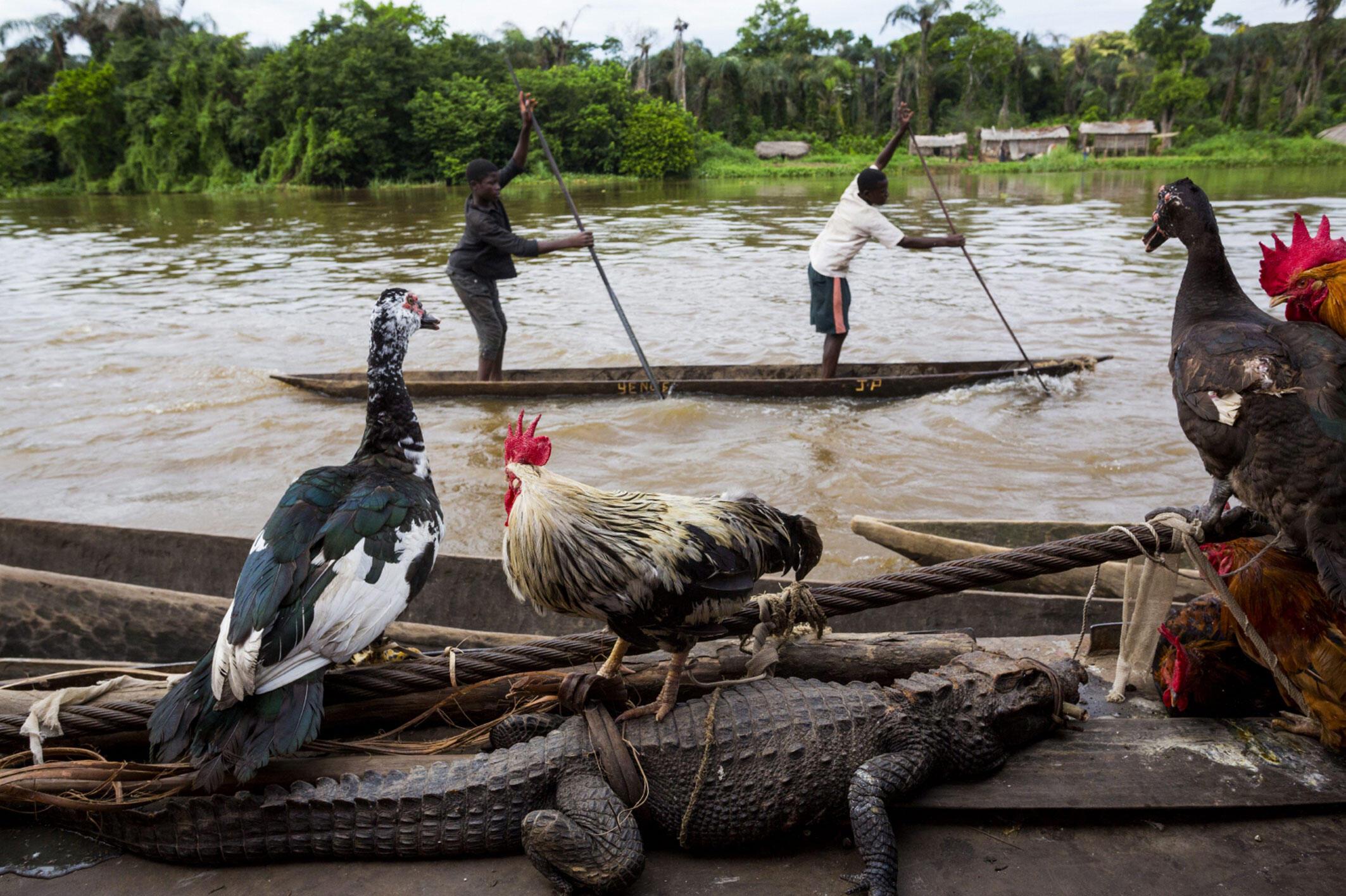 Pascal Maitre expose ses photos du fleuve Congo au bord duquel vivent 30 millions de personnes ...et quelques animaux.