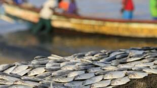 Afrique - Pêche - Sénégal - Dakar - Bateaux - Pêcheurs - GettyImages-538118744