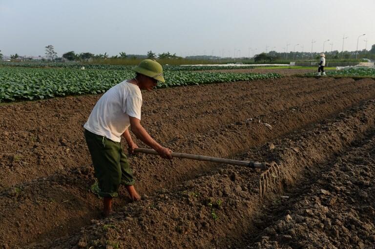 Một mảnh ruộng ở Việt Nam. Ảnh minh họa.
