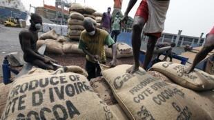 Des dockers empilent des sacs de cacao dans le port d'Abidjan.