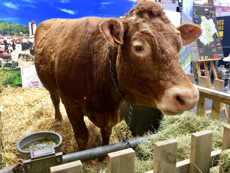 Parte de bovinos é uma das atrações preferidas dos visitantes do Salão Internacional da Agricultura, em Paris.
