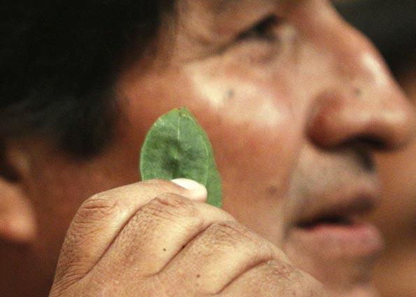 En marzo de 2012, Evo Morales defendía ante Naciones Unidas el masticado de la coca como tradición.