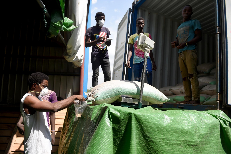 Trabalhador coleta amostras de um saco de grãos de sorgo para teste no Instituto Internacional de Agricultura Tropical (IITA) em Ibadan, sudoeste da Nigéria. 22/07/2017.