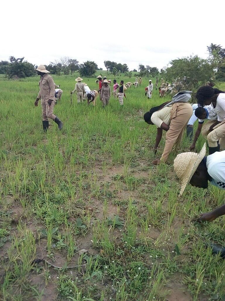 768px-University_of_Agriculture_Makurdi_Students
