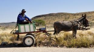 Traction asine en Namibie (photo d'illustration).