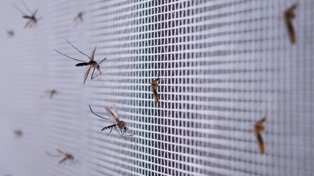Inquiétude sur la recrudescence de paludisme au Tchad