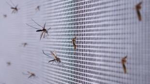 paludisme moustiques moustiquaire