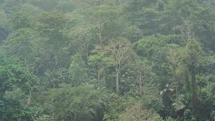 Floresta do Congo sob fina chuva.