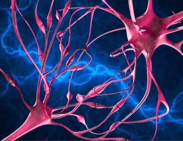 La proteína tau es la responsable de las arborescencias de las neuronas. El exceso de proteína tau es uno de los factores que puede provocar Alzheimer.