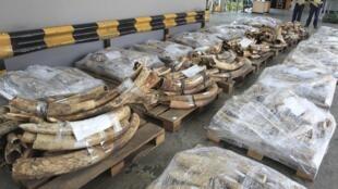 Ngà voi buôn lậu bị tịch thu tại Hồng Kông. Ảnh chụp ngày 20/10/2012.