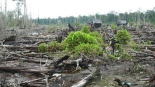 Tại Indonesia, khoảng 80% khí thải gây hiệu ứng nhà kính là do phá rừng.
