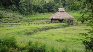 Le Kamu Lodge est entouré de rizières, de forêts et de montagnes.