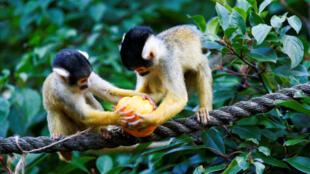 Из-за деятельности человека на Земле уничтожено 60% видов животных