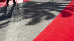 Cannes festival palm