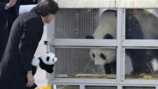 中国大熊猫好好和星徽到比利时受到首相埃利奥·迪吕波迎接2014年2月