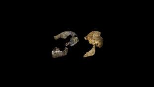 Crânio do Homo naledi, antiga espécie do gênero humano descoberta na África do Sul.