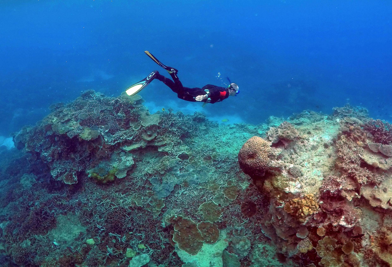 Dải san hô đang trở nên thưa thớt ở dưới vùng biển gần đảo Lady Elliot, Úc. Ảnh chụp ngày 11/06/2015.
