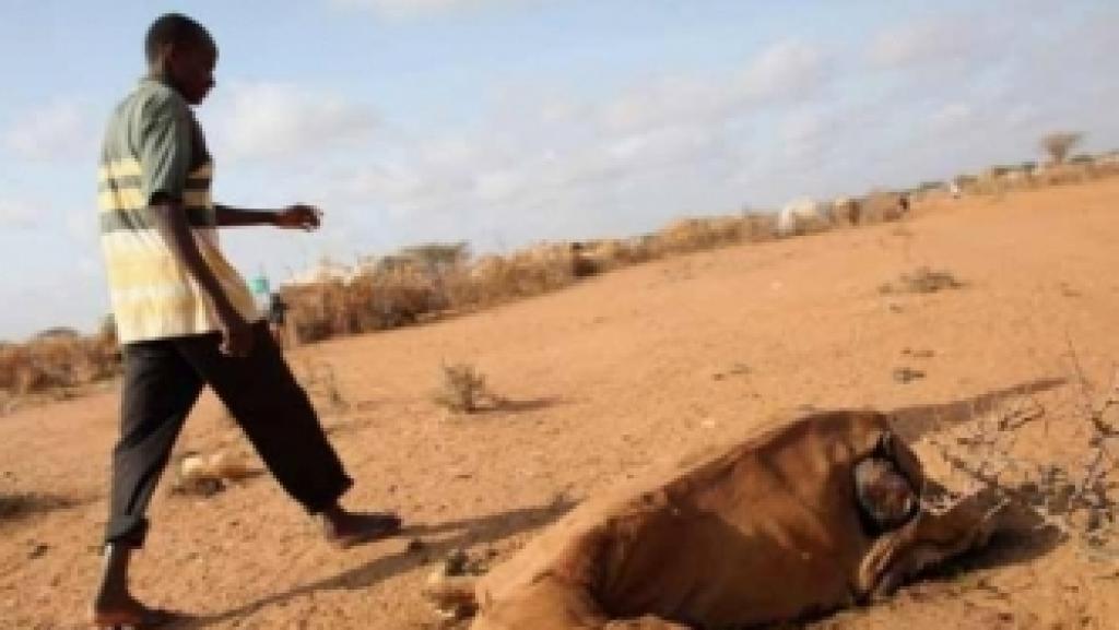 Efeitos terríveis da seca em Moçambique que mata gados e agora ameaça pessoas em Gaza
