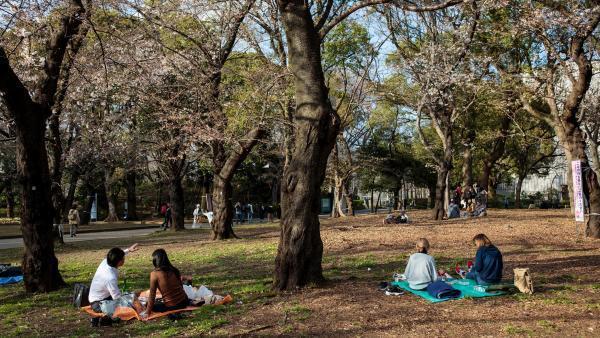 Des Japonais pique-niquent dans le parc de Ueno pour fêter les cerisiers en fleur, à Tokyo, le 19 mars 2020.