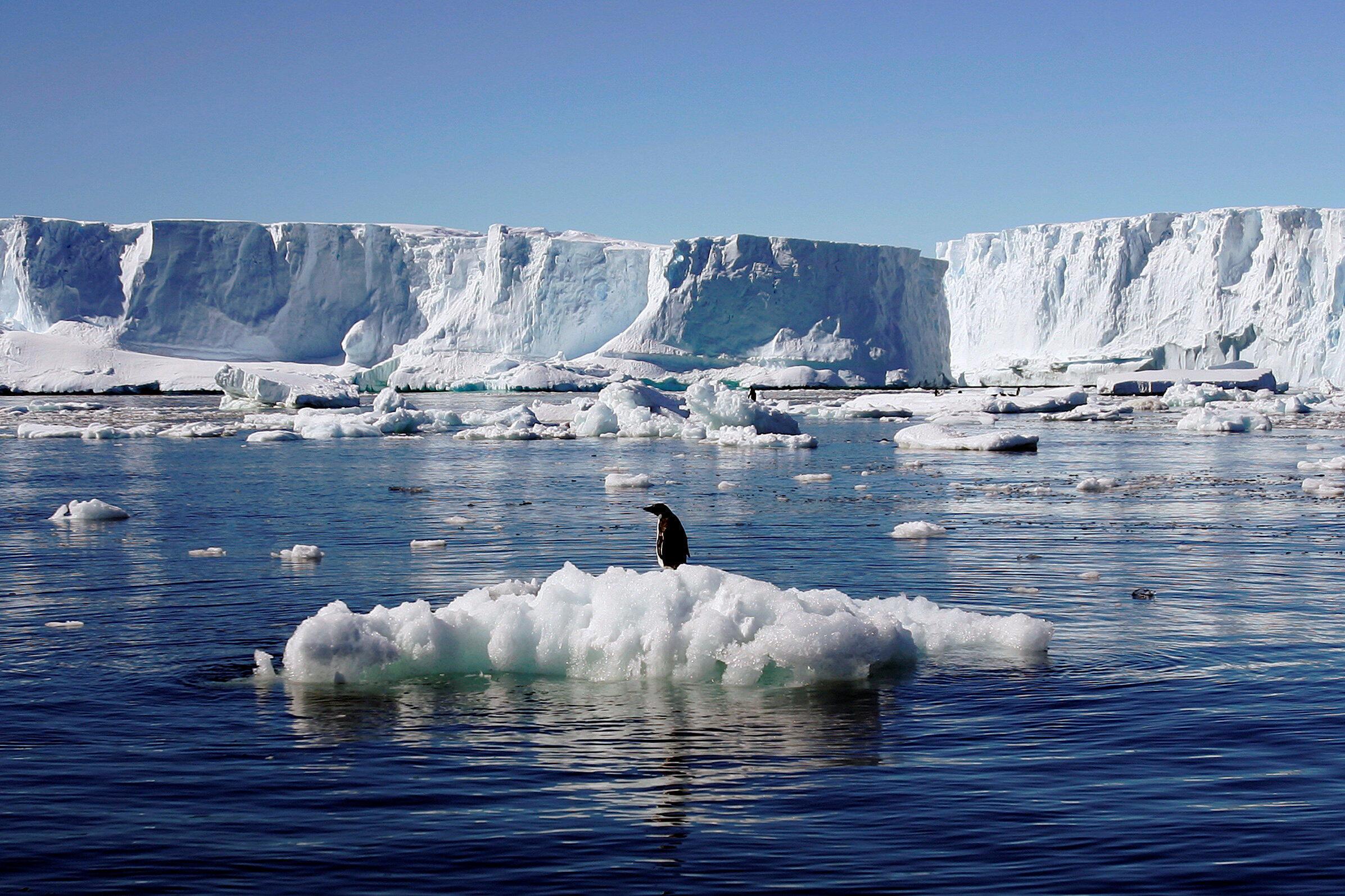 Pingüino en la Antártida.