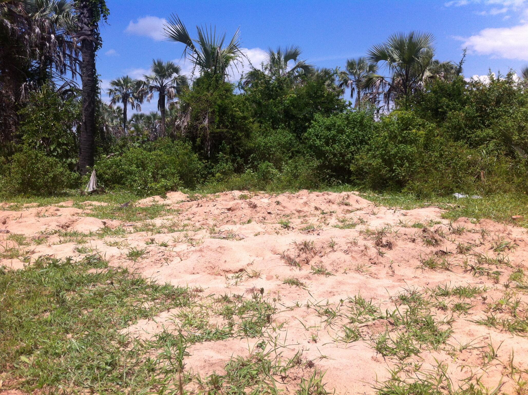 Une fosse commune présumée située en lisière de forêt, non loin du cimetière de Mpanda où des témoins disent avoir vu quinze corps de militaires et de civils enterrés par des policiers, dans la foulée des attaques du 11 décembre.
