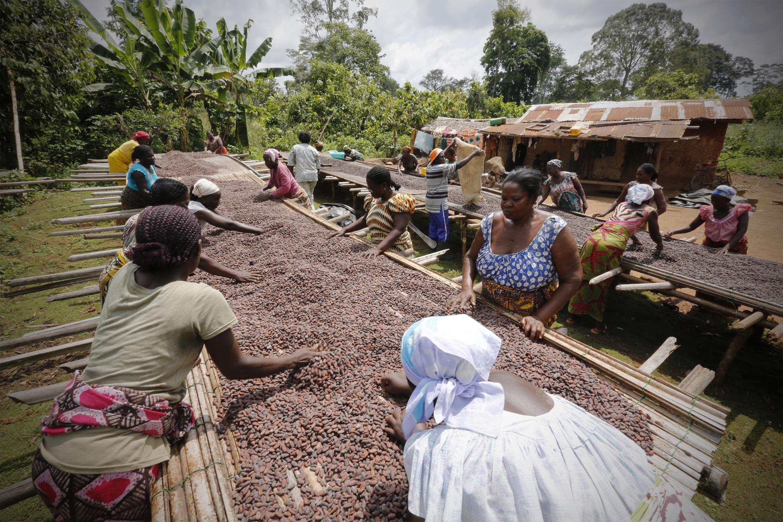 Côte d'Ivoire - cacao