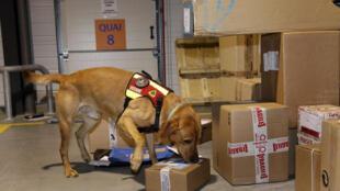 Un perro de las aduanas francesas en plena acción.
