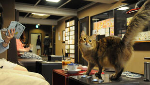 貓咪咖啡館