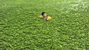 Hồ tràn ngập tảo ở Thanh Đảo, tỉnh Sơn Đông, Trung Quốc (ảnh chụp ngày 15/07/2011)