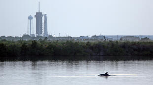 SpaceX's Falcon 9 rocket in the background as dolphins swim in a lagoon near Launch Pad 39A at the Kennedy Space Center in Florida