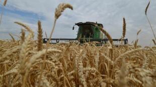 世界第一大小麥出口國俄羅斯宣布停止小麥出口,2020年4月26日。