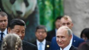 В Китае панды являются не только одним из национальных символов, но и оружием «мягкой» силы