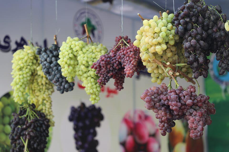 جشنواره انگور در هرات
