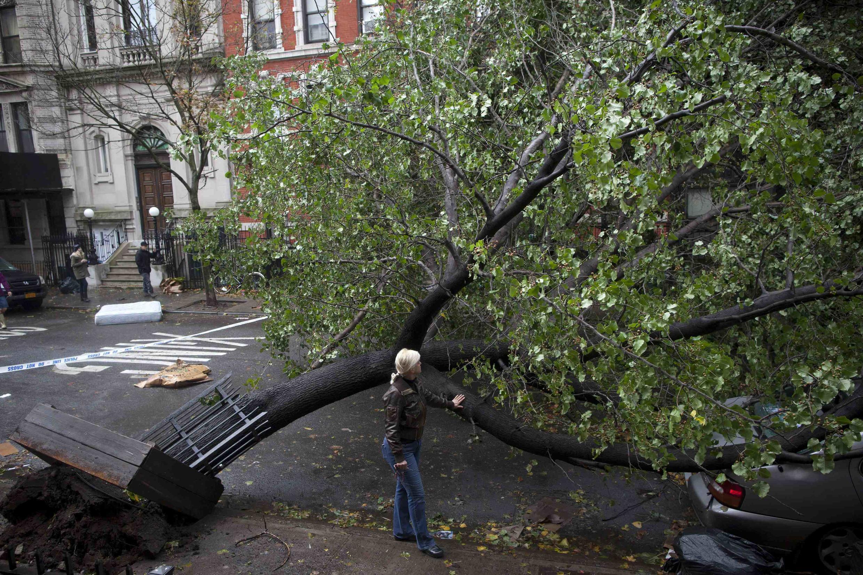 Uma árvore derrubada depois da passagem do furacão Sandy, em Alphabet City, em Manhattan, à New York.