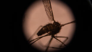"""Malaria killed at least four times as many more people in Africa last year as Covid did,"" Professor Adrian Hill said"