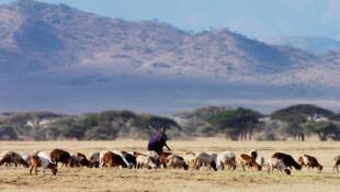La peste des petits ruminants ou PPR s'est déclarée en Tanzanie début 2010, menaçant une population locale de plus de 13,5 millions de caprins et plus de 3,5 millions d'ovins.