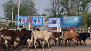 Un éleveur et son troupeau à Niamey, en février 2016.