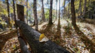 Desmatamento relacionado à exploração madeireira contribuiu para a destruição das florestas em 2016.