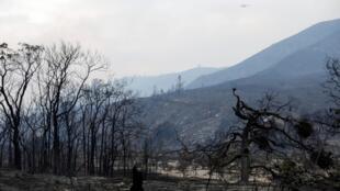 Un incendie a ravagé une partie de la forêt nationale d'Angeles en août 2020. Ici une photo datée du 13 août 2020.