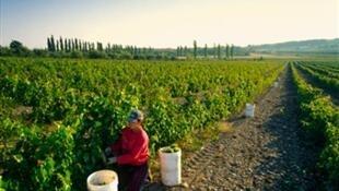 Vignobles du Québec.