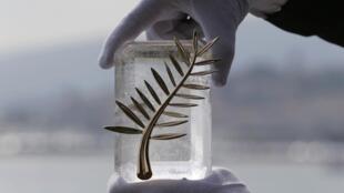 Кто получит Золотую пальмовую ветвь 69-го Каннского фестиваля?