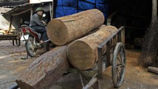 Vietnam - bois - taxe