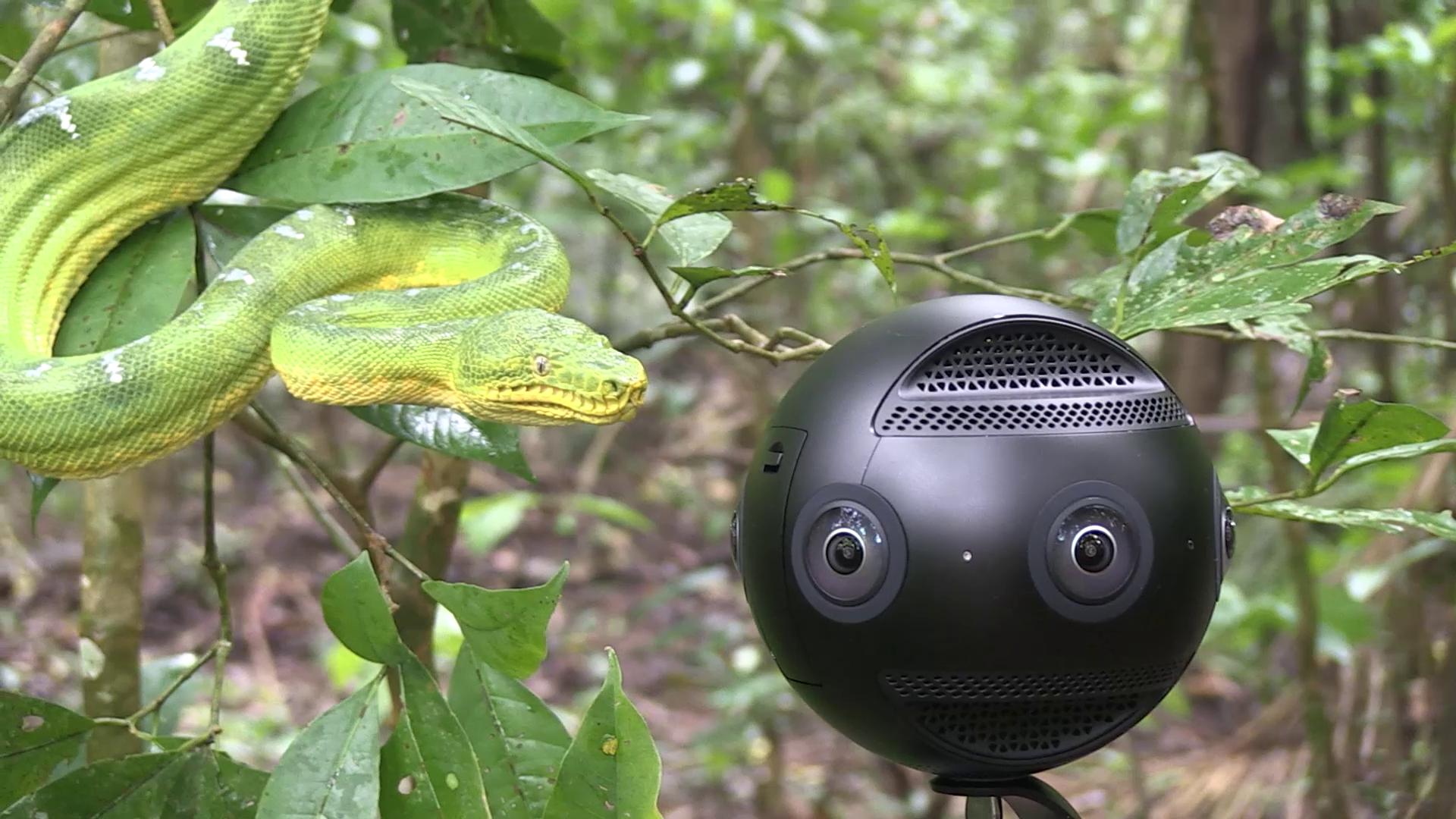 Les caméras employées par les réalisateurs doivent être au plus près des animaux.